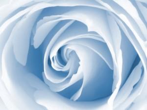 Blue-Rose-beautiful-flower-wallpaper