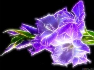 thumb3_violet_flower_6